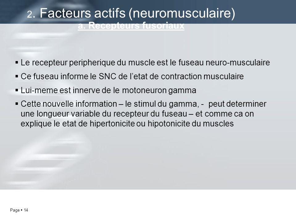 2. Facteurs actifs (neuromusculaire) a. Recepteurs fusoriaux