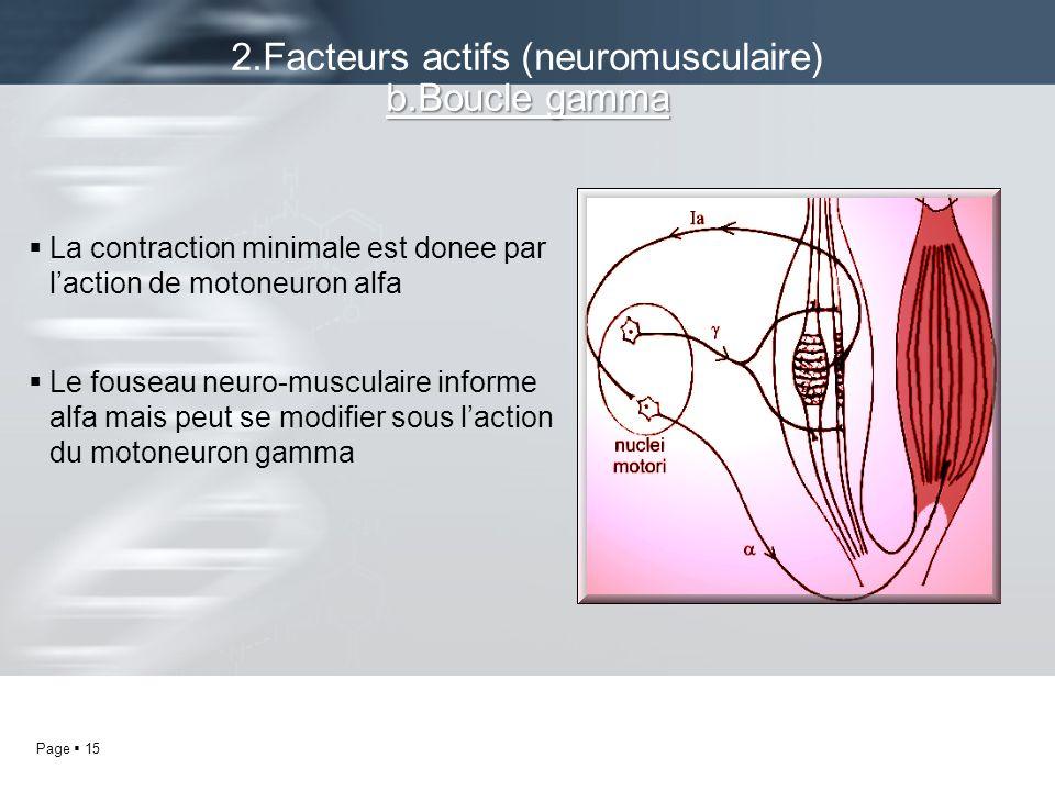2.Facteurs actifs (neuromusculaire) b.Boucle gamma