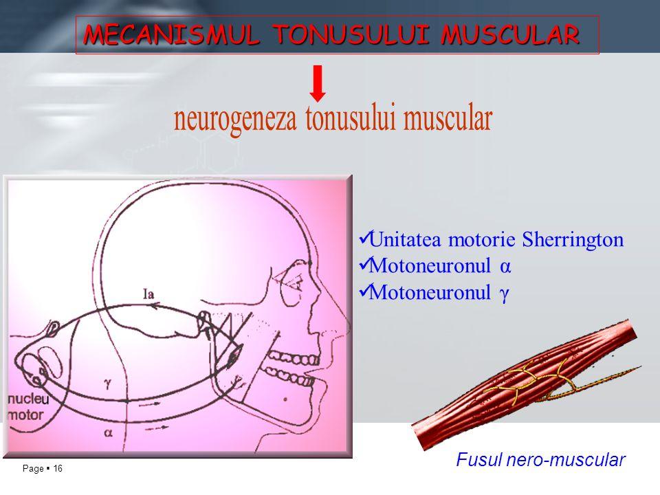 MECANISMUL TONUSULUI MUSCULAR