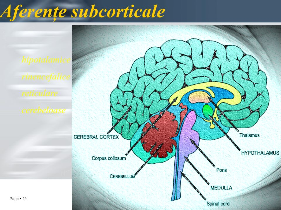 Aferenţe subcorticale