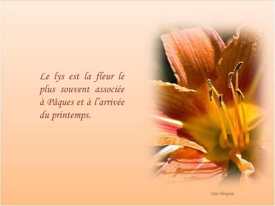 Le lys est la fleur le plus souvent associée à Pâques et à l'arrivée du printemps.