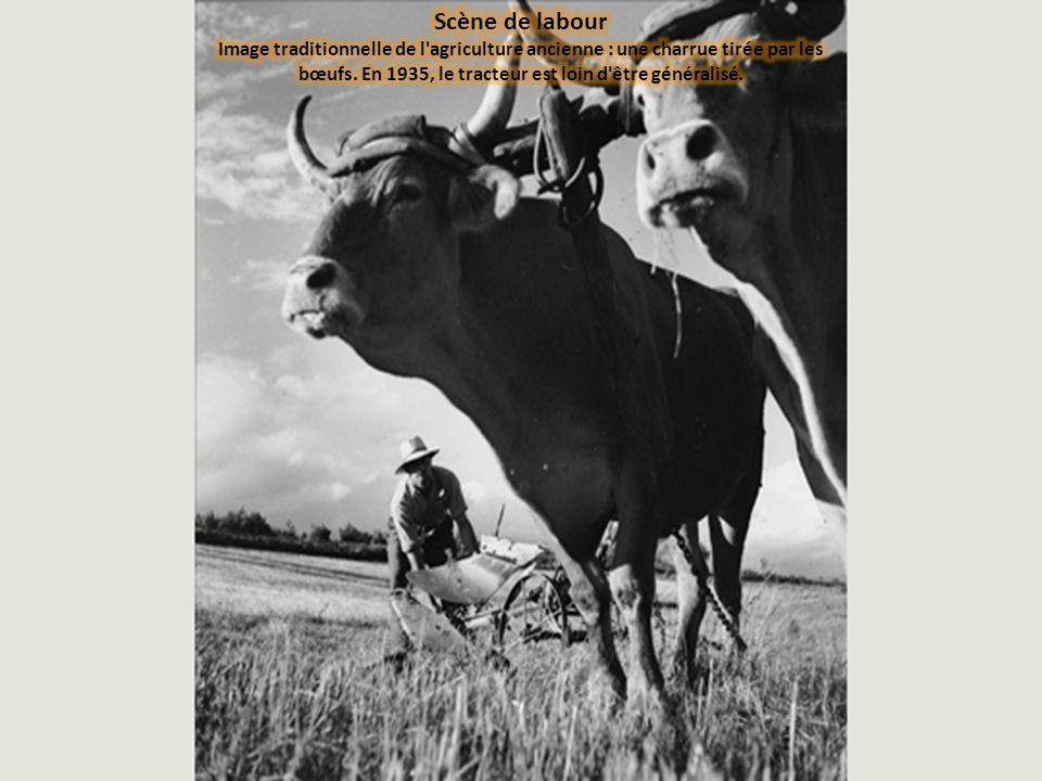 Scène de labour Image traditionnelle de l agriculture ancienne : une charrue tirée par les bœufs.
