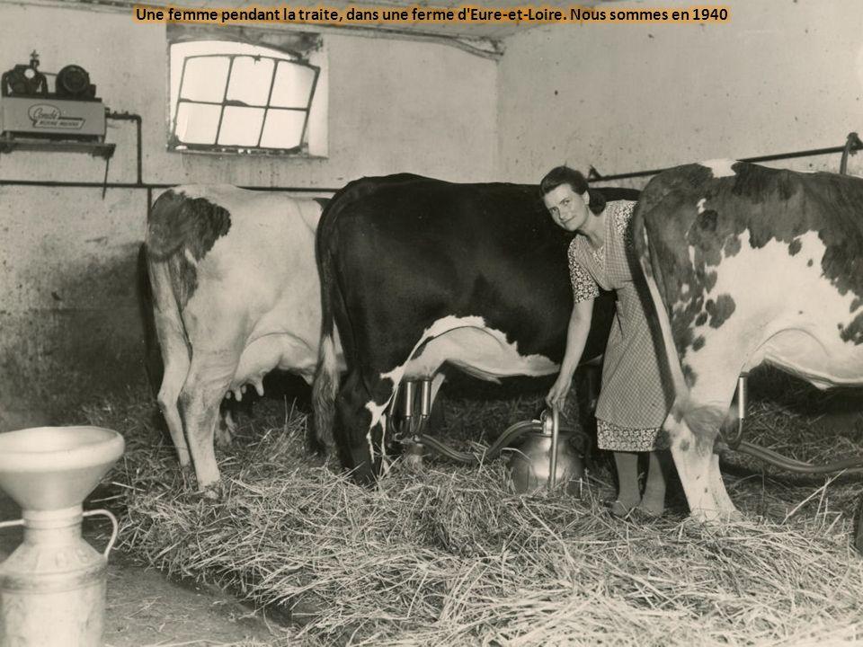 Une femme pendant la traite, dans une ferme d Eure-et-Loire