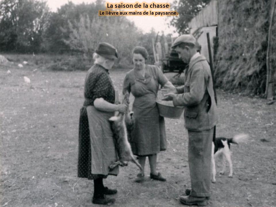 Le lièvre aux mains de la paysanne.