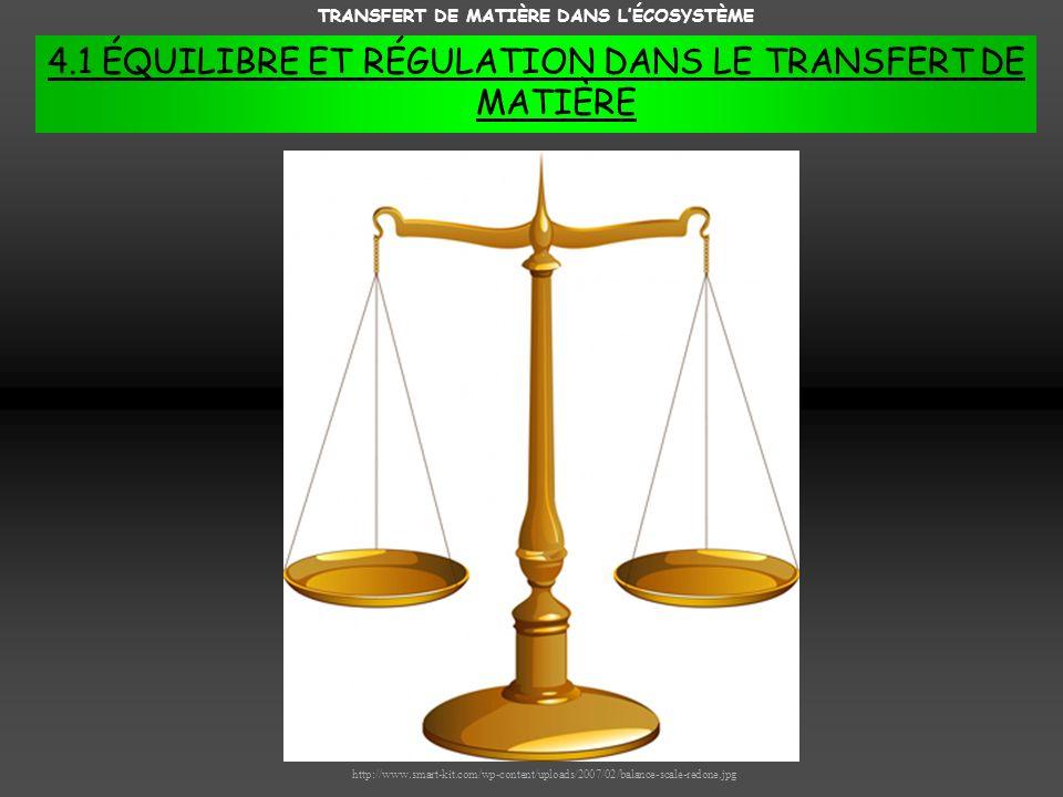 TRANSFERT DE MATIÈRE DANS L'ÉCOSYSTÈME