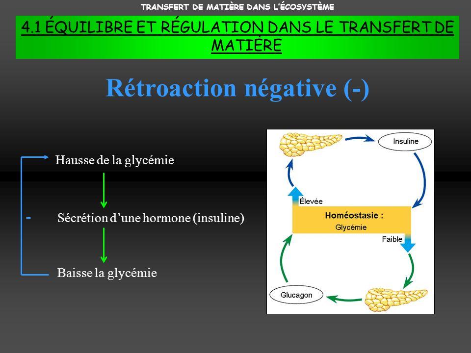 TRANSFERT DE MATIÈRE DANS L'ÉCOSYSTÈME Rétroaction négative (-)