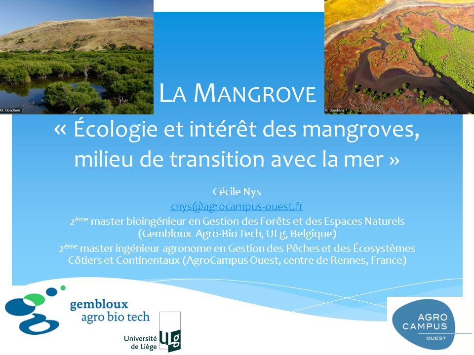 La Mangrove « Écologie et intérêt des mangroves, milieu de transition avec la mer »