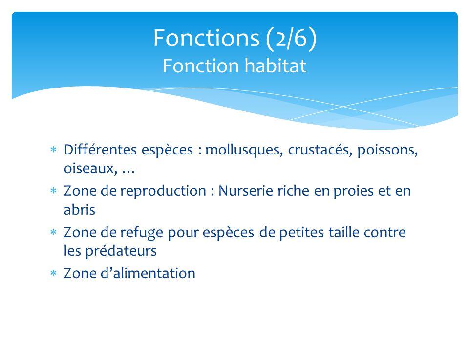 Fonctions (2/6) Fonction habitat