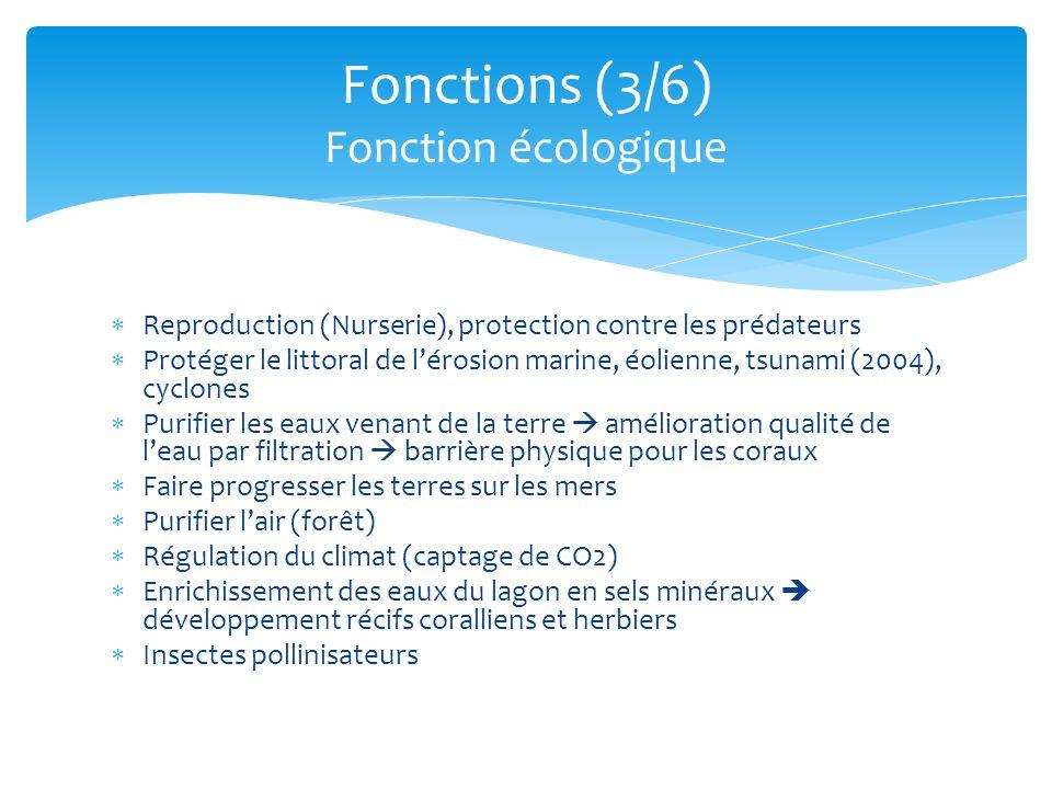 Fonctions (3/6) Fonction écologique