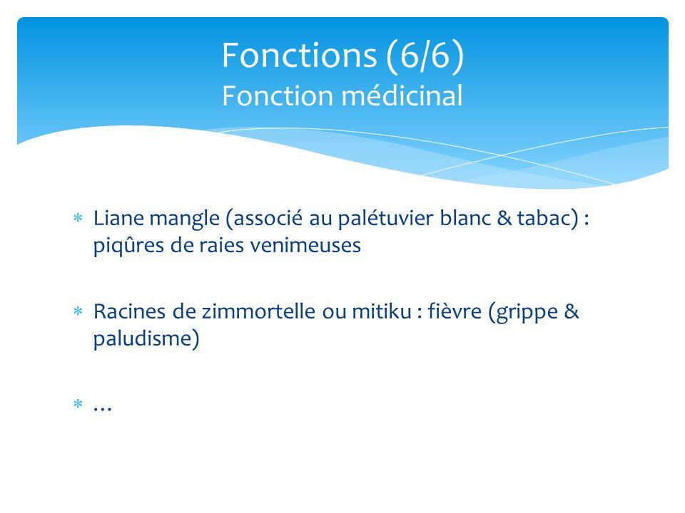 Fonctions (6/6) Fonction médicinal