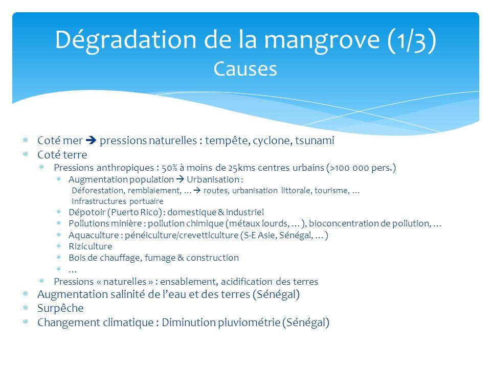 Dégradation de la mangrove (1/3) Causes