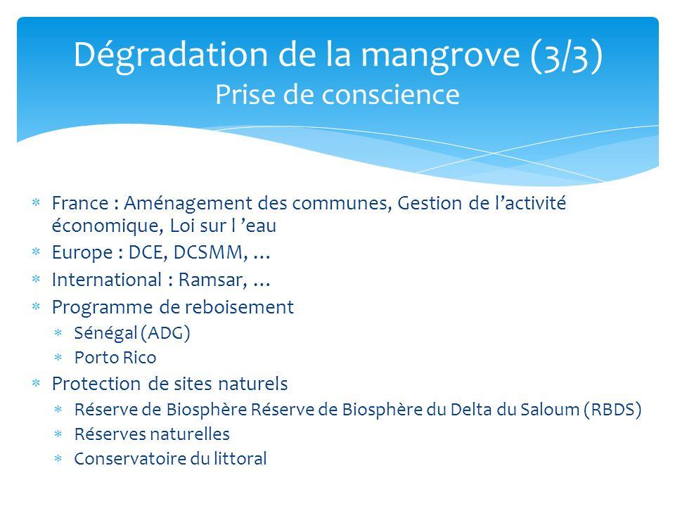 Dégradation de la mangrove (3/3) Prise de conscience