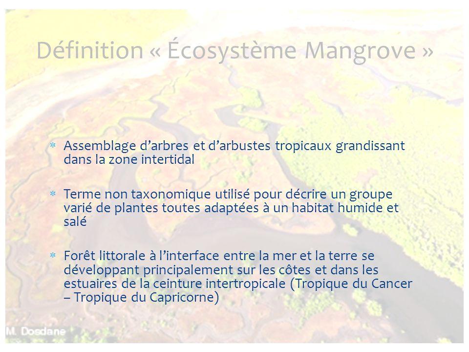 Définition « Écosystème Mangrove »
