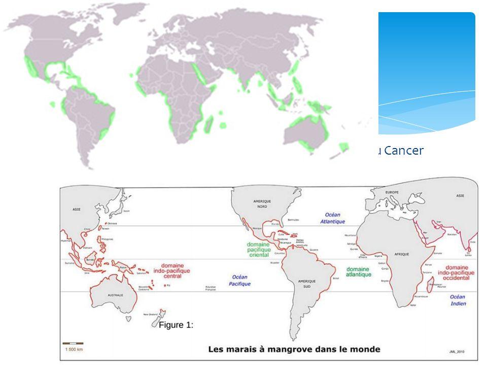 Localisation Majoritairement : Zone intertropicale entre tropique du Cancer et tropique du Capricorne.