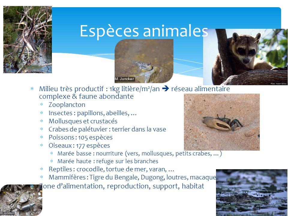 Espèces animales Milieu très productif : 1kg litière/m²/an  réseau alimentaire complexe & faune abondante.
