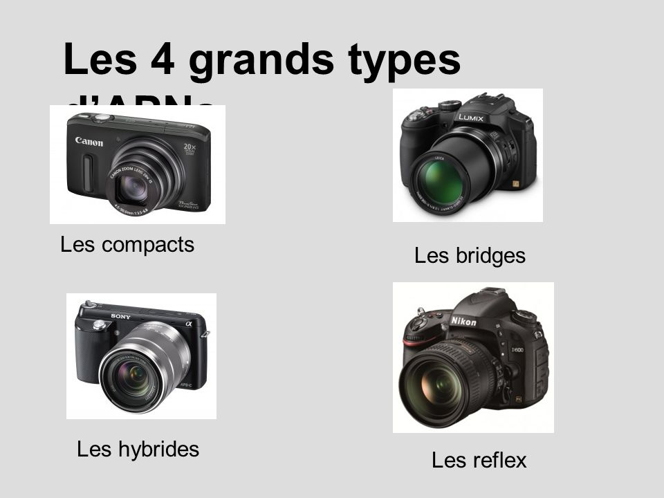 Les 4 grands types d'APNs