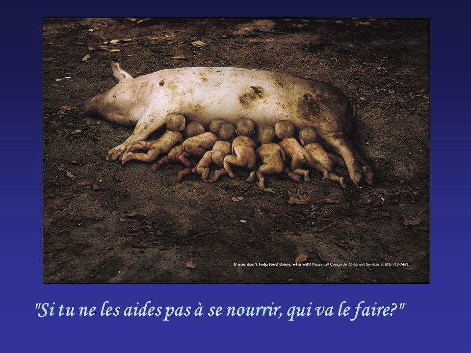 Si tu ne les aides pas à se nourrir, qui va le faire