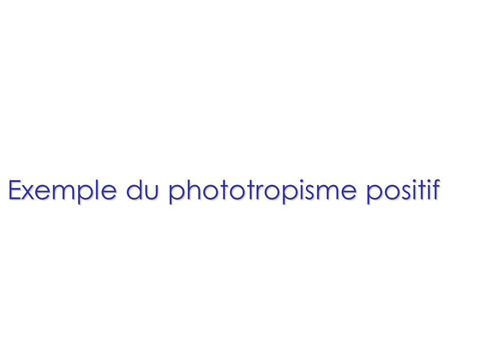 Exemple du phototropisme positif