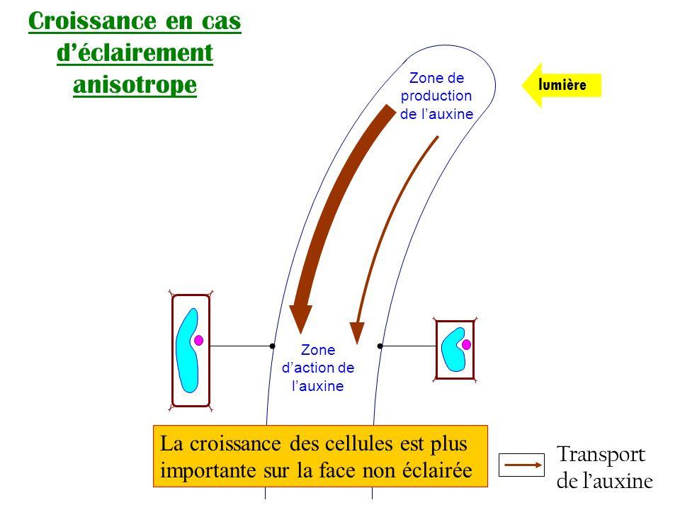 Croissance en cas d'éclairement anisotrope