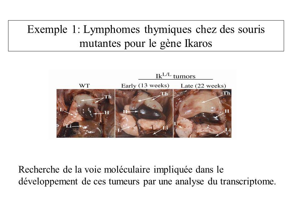 Exemple 1: Lymphomes thymiques chez des souris mutantes pour le gène Ikaros