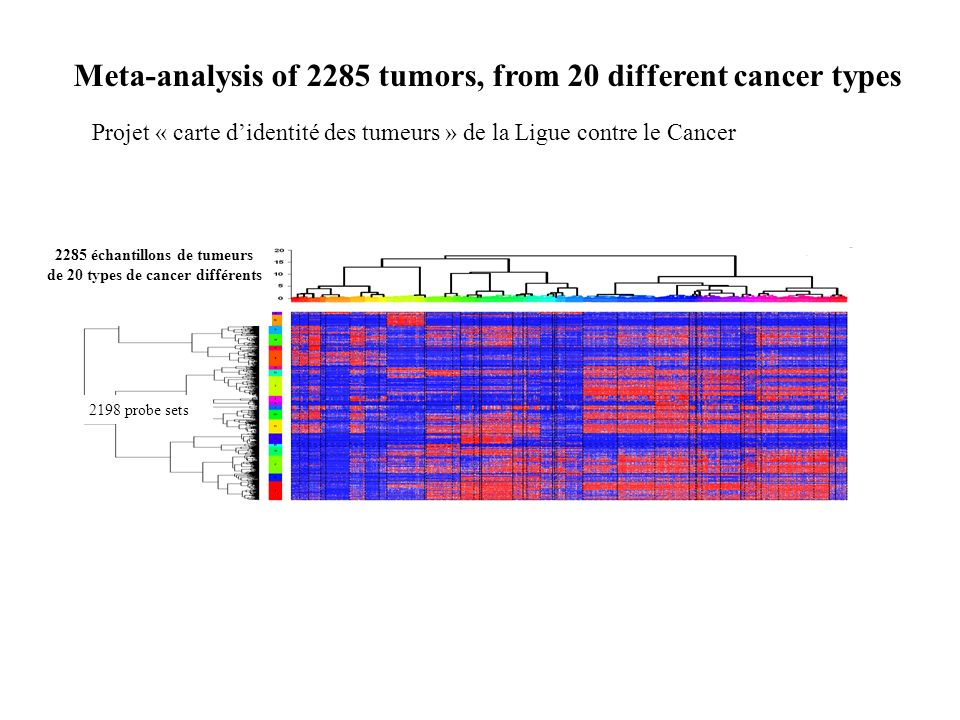 Meta-analysis of 2285 tumors, from 20 different cancer types