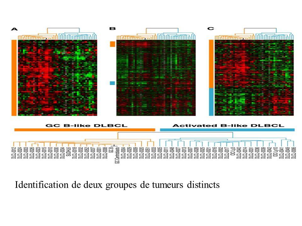 Identification de deux groupes de tumeurs distincts