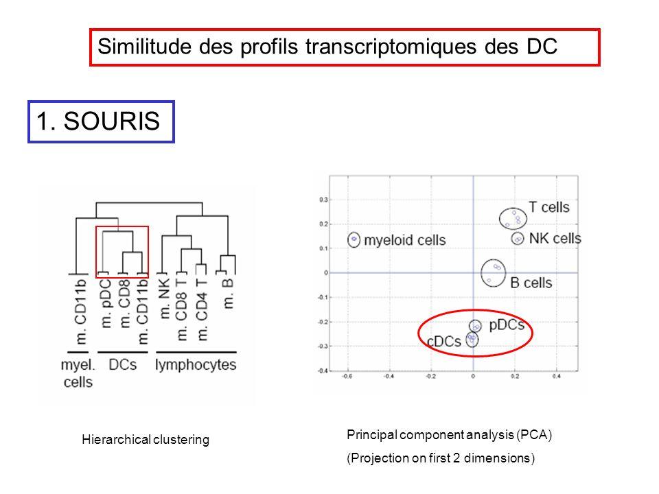 1. SOURIS Similitude des profils transcriptomiques des DC