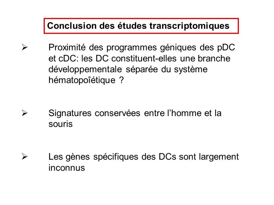 Conclusion des études transcriptomiques