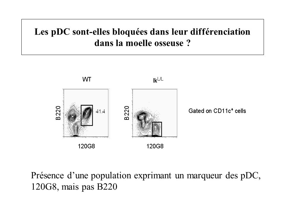 Les pDC sont-elles bloquées dans leur différenciation dans la moelle osseuse