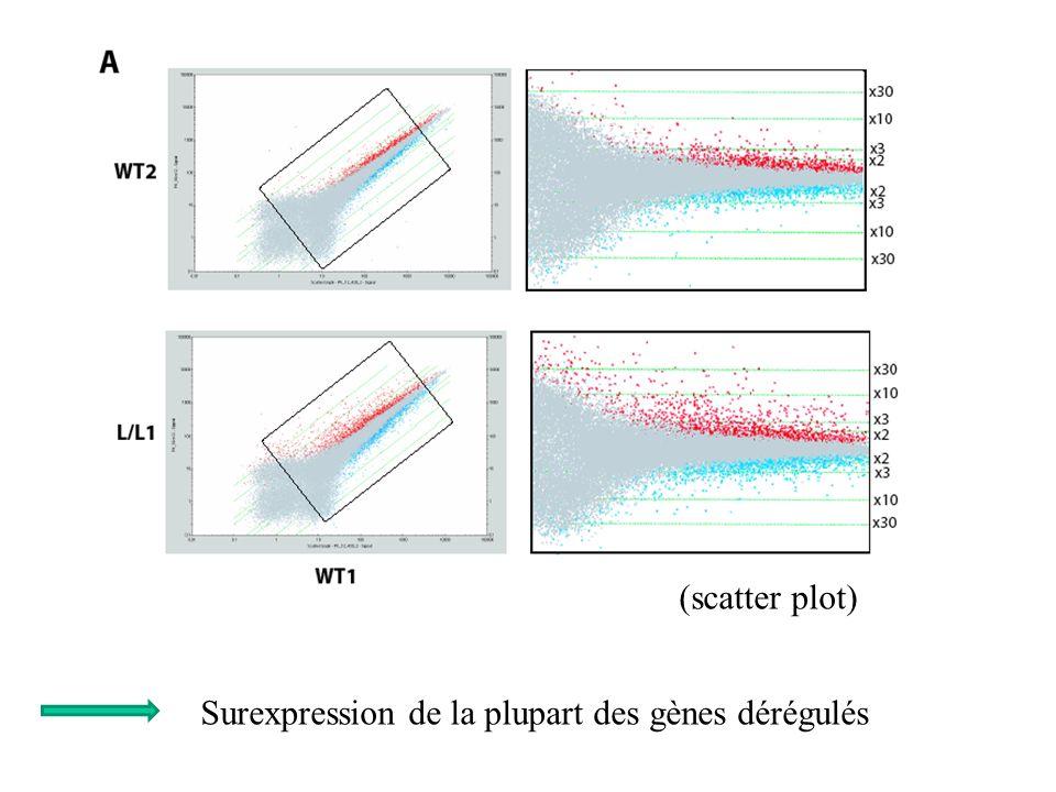 (scatter plot) Surexpression de la plupart des gènes dérégulés