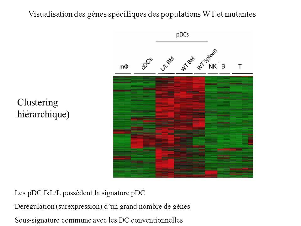Visualisation des gènes spécifiques des populations WT et mutantes