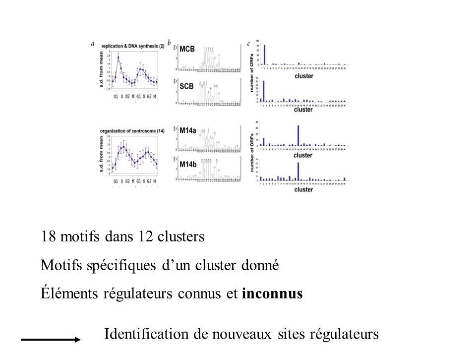 18 motifs dans 12 clusters Motifs spécifiques d'un cluster donné. Éléments régulateurs connus et inconnus.