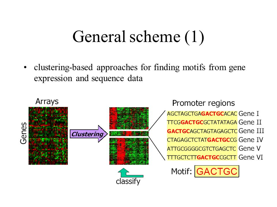 General scheme (1) clustering-based approaches for finding motifs from gene expression and sequence data.