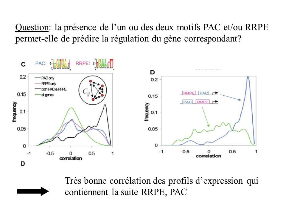 Question: la présence de l'un ou des deux motifs PAC et/ou RRPE permet-elle de prédire la régulation du gène correspondant