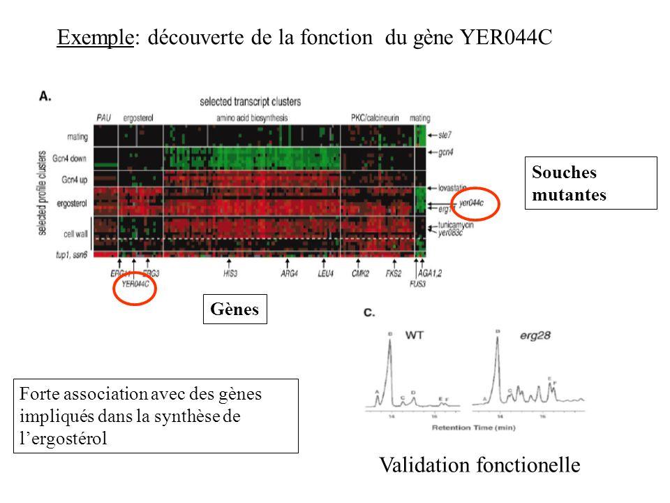 Exemple: découverte de la fonction du gène YER044C