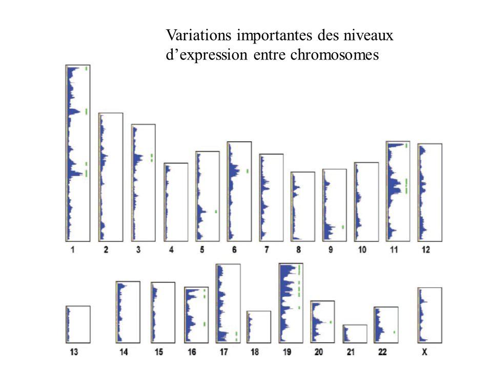 Variations importantes des niveaux d'expression entre chromosomes