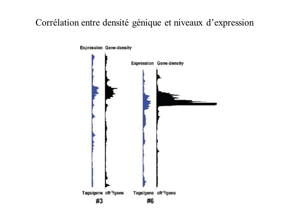 Corrélation entre densité génique et niveaux d'expression