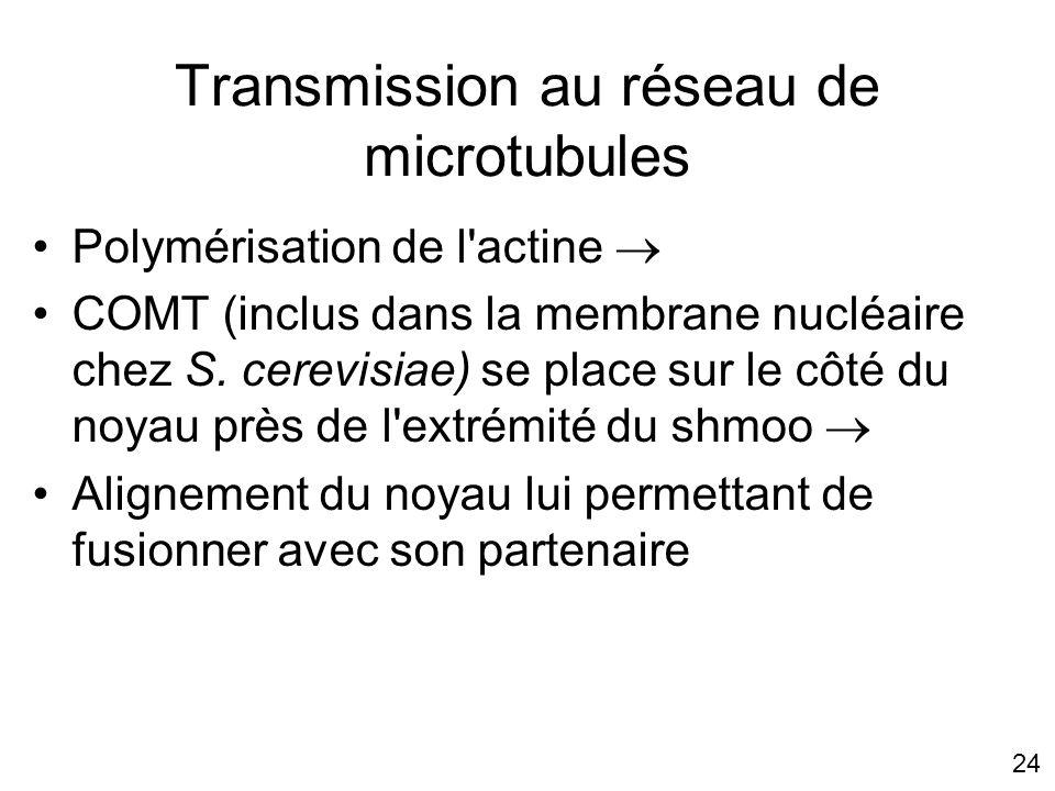 Transmission au réseau de microtubules