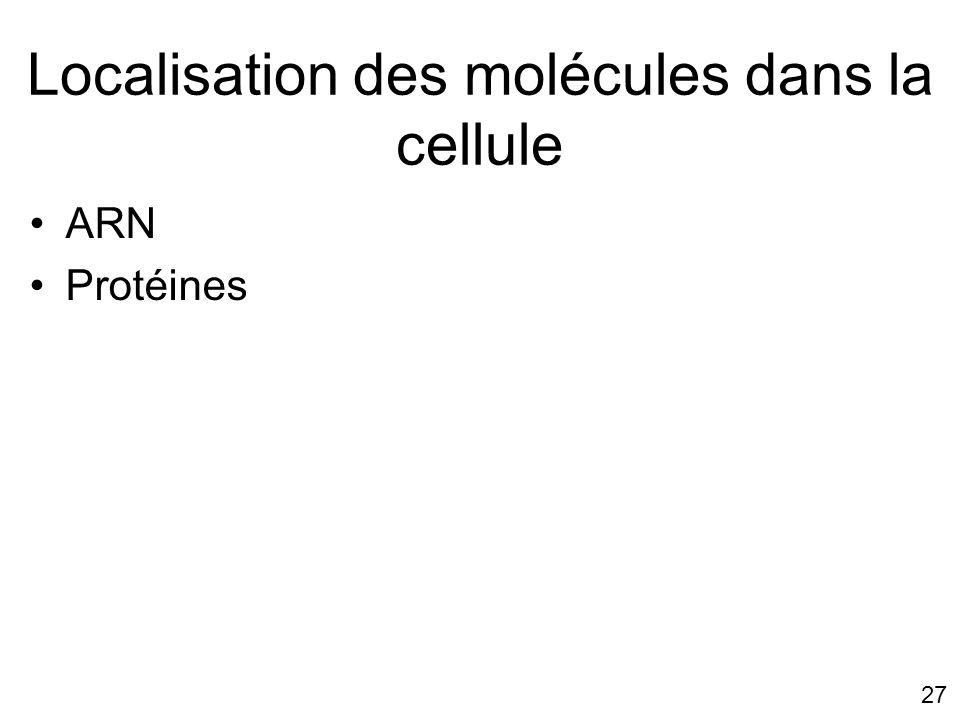 Localisation des molécules dans la cellule