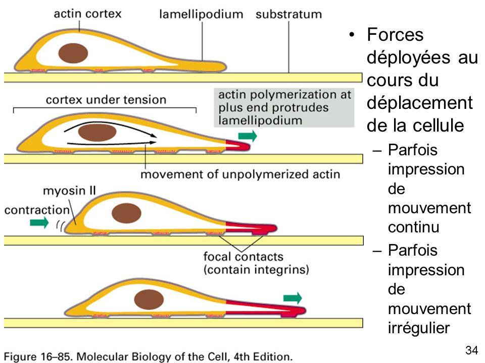Fig 16-85 Forces déployées au cours du déplacement de la cellule
