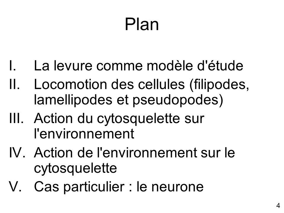 Plan La levure comme modèle d étude
