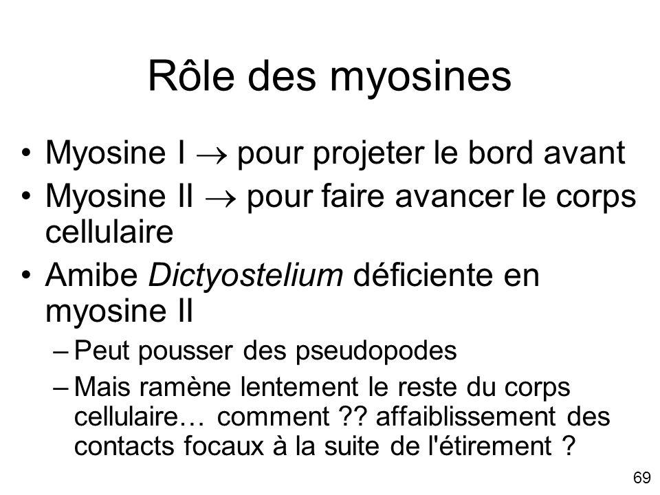 Rôle des myosines Myosine I  pour projeter le bord avant