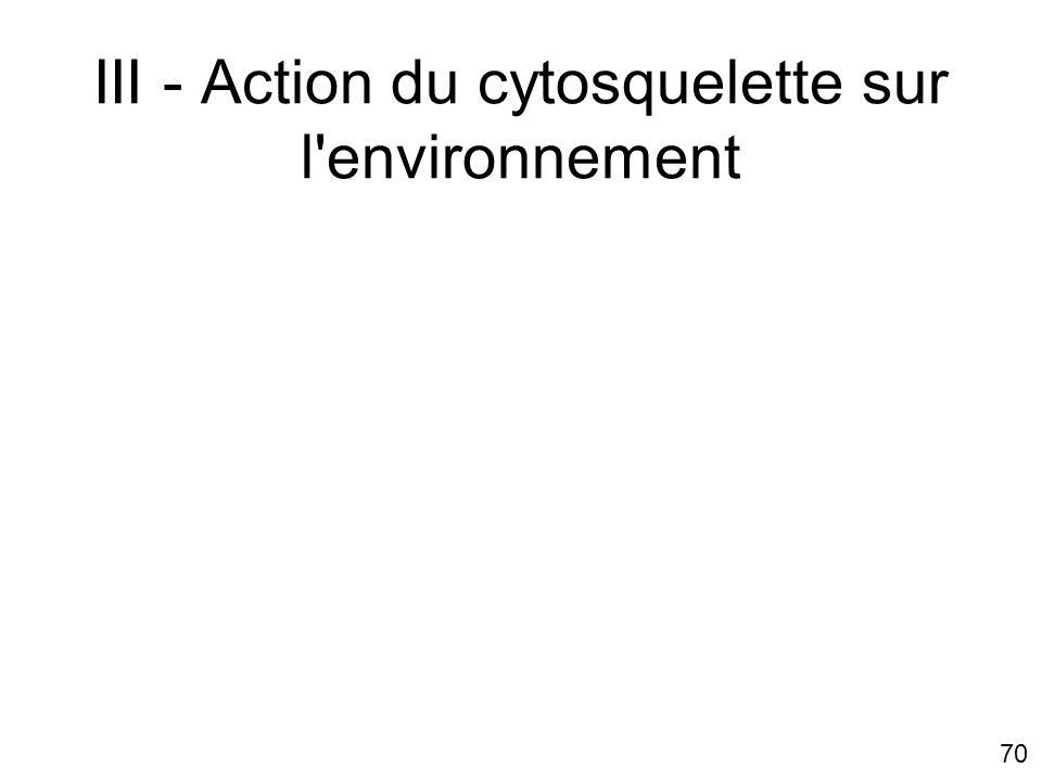 III - Action du cytosquelette sur l environnement
