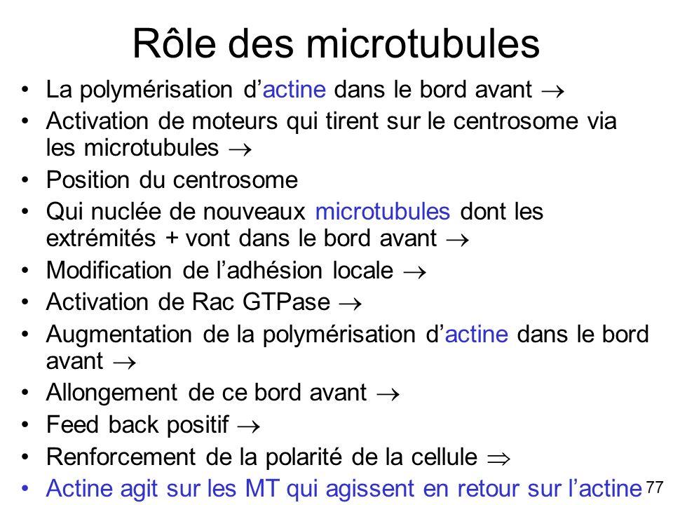 Rôle des microtubules #6p978