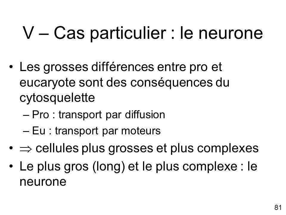 V – Cas particulier : le neurone