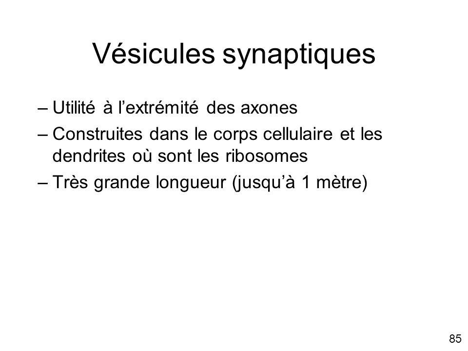 Vésicules synaptiques