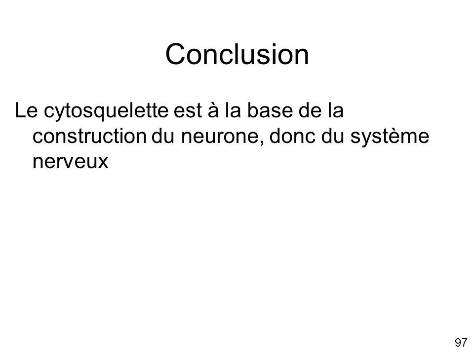 Mercredi 21 novembre 2007 Conclusion. Le cytosquelette est à la base de la construction du neurone, donc du système nerveux.