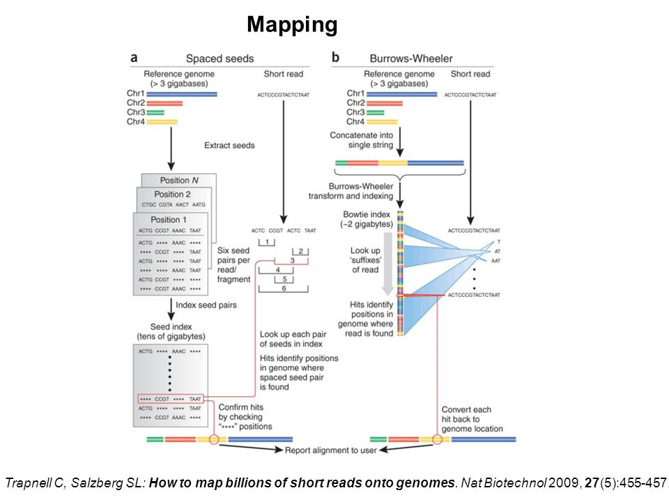 Mapping Maq. Bowtie. Trapnell C, Salzberg SL: How to map billions of short reads onto genomes.