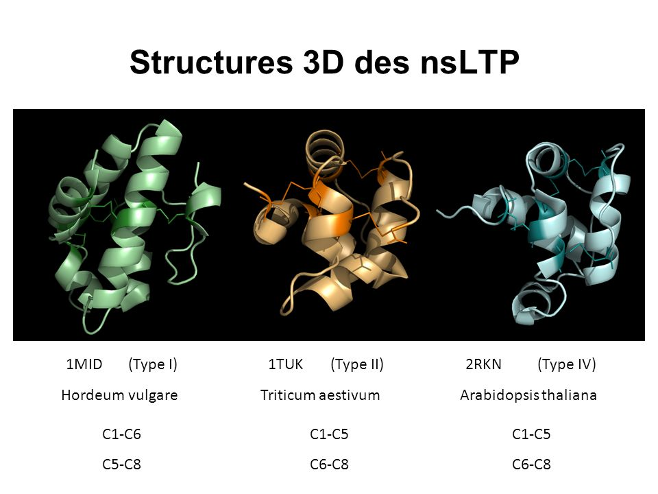 Structures 3D des nsLTP 1MID (Type I) 1TUK (Type II) 2RKN (Type IV)