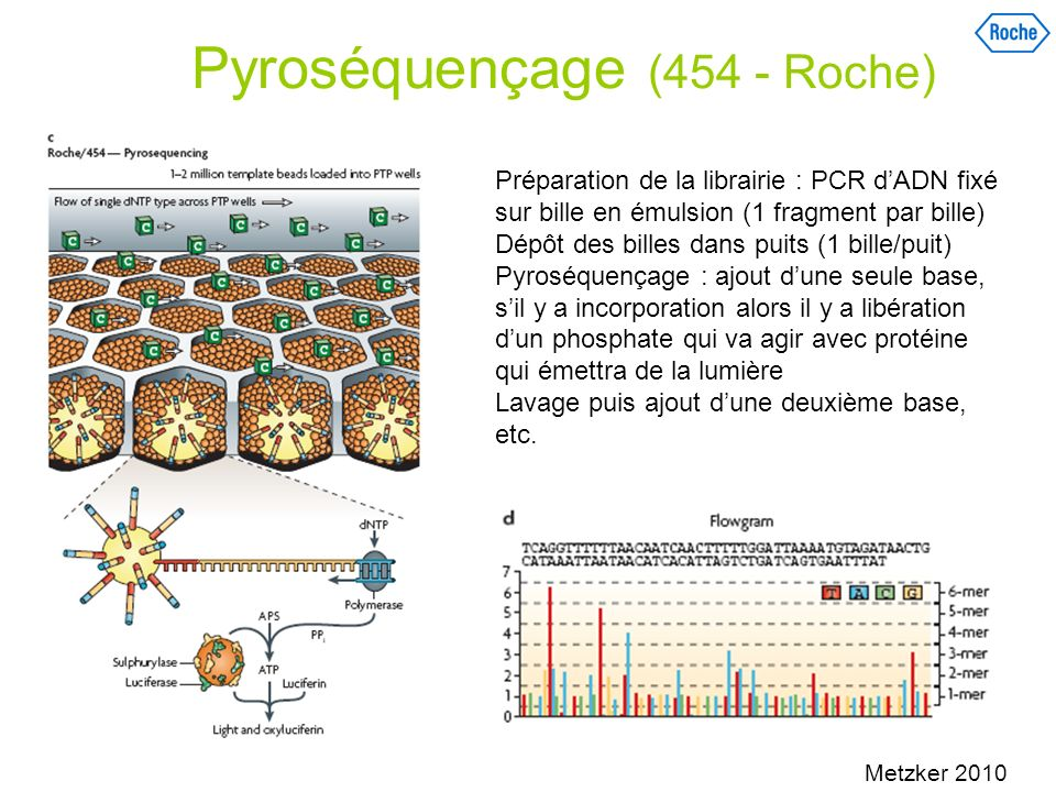 Pyroséquençage (454 - Roche)